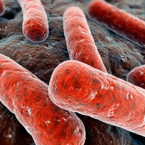 mycobacterium tuberculosis – возбудитель туберкулеза