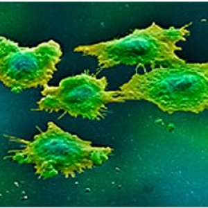 Микоплазмы (вид под микроскопом).