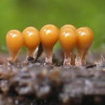 Строение и жизнедеятельность грибков