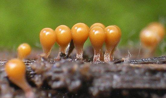 грибки