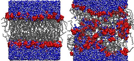 повреждение мембраны бактериальной клетки антибиотиками