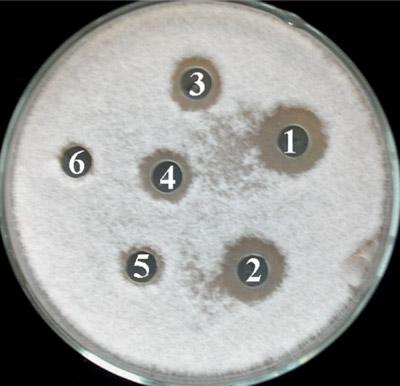 диско-диффузионный метод определения чувствительности к антибиотикам
