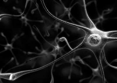 Herpes в нервной клетке