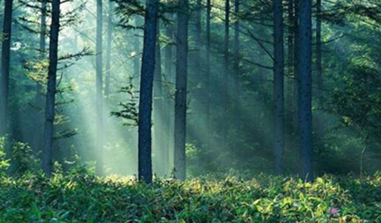 лиственный лес, умеренно затененный с густым травостоем - любимое место обитания клещей