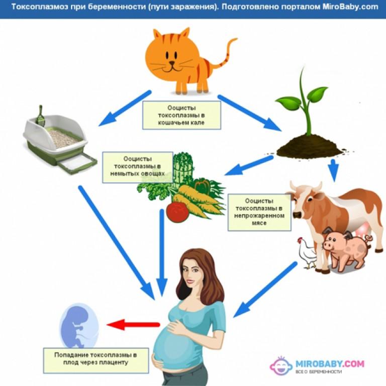 Анализ при беременности от кошек