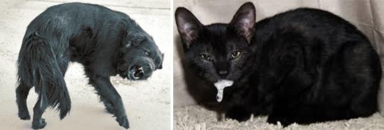 вирусы бешенства циркулируют среди собак и кошек