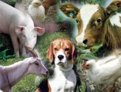 животные, которые болеют и распространяют бруцеллез