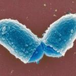 О возбудителе, эпидемиологии и патогенезе дифтерии