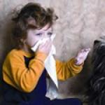 Все о возбудителе менингококковой инфекции, эпидемиологии и патогенезе заболевания
