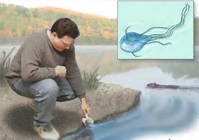 водоемы паразиты лямблии
