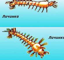 malyarijnyj-komar-p-20