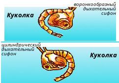 malyarijnyj-komar-p-25