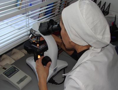 метод Като микроскопия аскариды