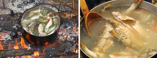 паразиты рыба варка