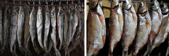 рыба описторхоз