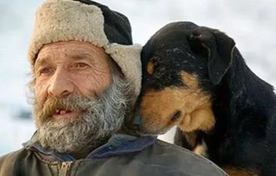 эхинококк инфицированные собаки