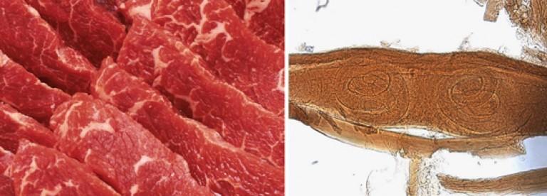 Как проверить мясо на трихинеллез в домашних условиях 69