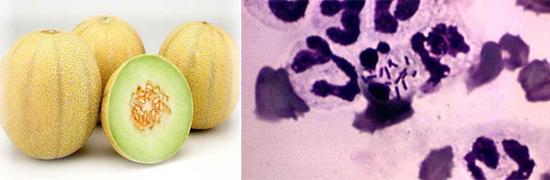 листериоз фото продукты