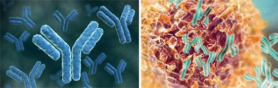 антитела гепатит в