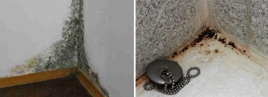 Грибки аспергиллы хорошо растут во влажных помещениях