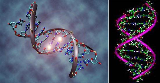 Вирусная ДНК показана на схеме