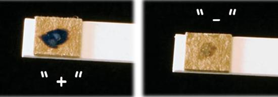 На фото показаны тесты для определения синегнойной инфекции.