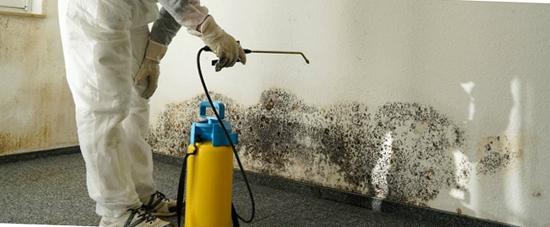 Для профилактики грибковых заболеваний следует проводить обработку помещения.