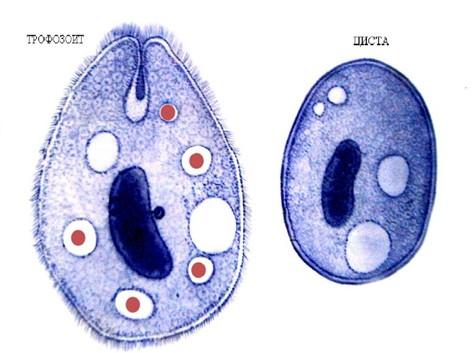 формы паразитов