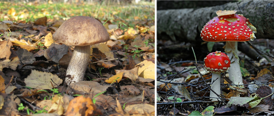 грибы в лесу