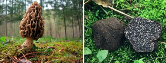 различные лесные грибы