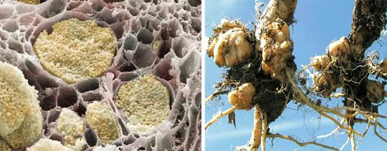 грибковые болезни