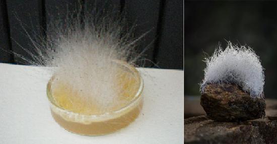 На фото плесневые грибки