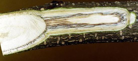 грибковые болезни растений