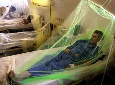 На фото лечение Dengue virus