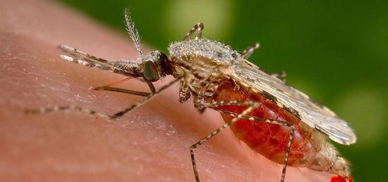 москиты являются переносчиками многих болезней