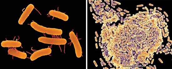 причина сальмонеллеза - бактерии