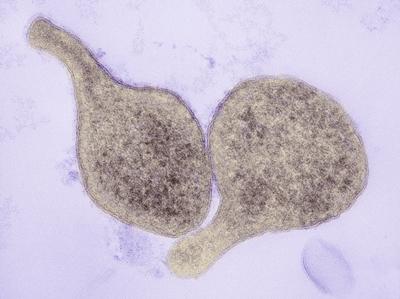 микроорганизмы патогенные
