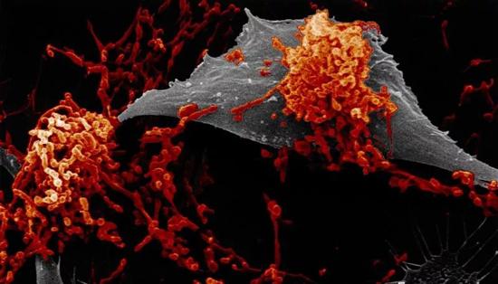 микоплазмы в легких