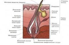 Причины и проявления акне (угревой сыпи)