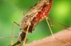 О малярии