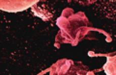 Что такое микоплазма. Характеристика микоплазмозов