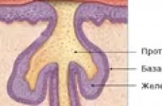 Причины появления перхоти, себореи и себорейного дерматита