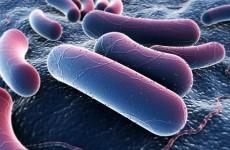 Роль бактерий в жизни человека. Полезные бактерии