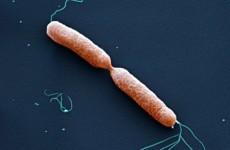 Рост и размножение бактерий