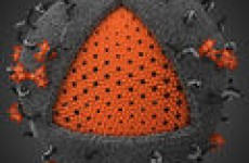 Характеристика вируса иммунодефицита человека